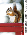 Tree squirrel eating peanut on red railing 7733516