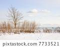 Winter shore of lake Ontario 7733521