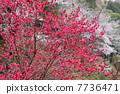 ต้นขาดอก 7736471