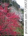ต้นขาดอก 7736472