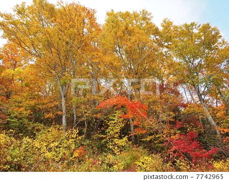 Autumn Echigo Yuzawa 03 7742965