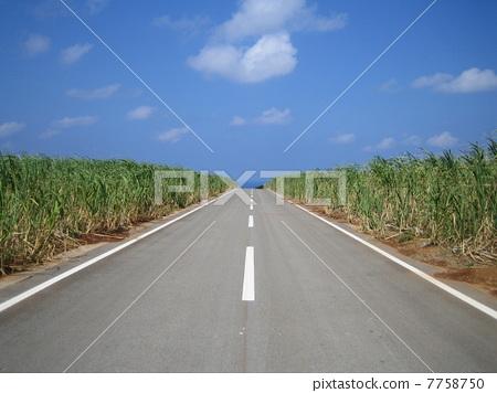 One road of Okinawa 7758750