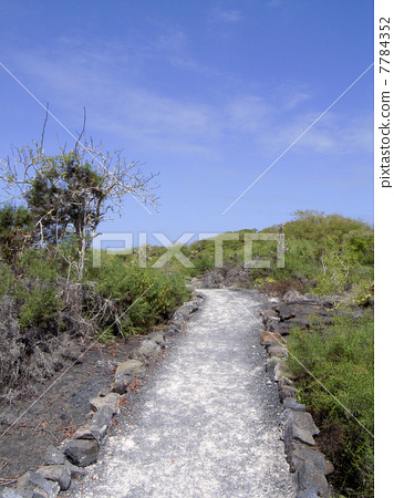Galapagos Islands 7784352