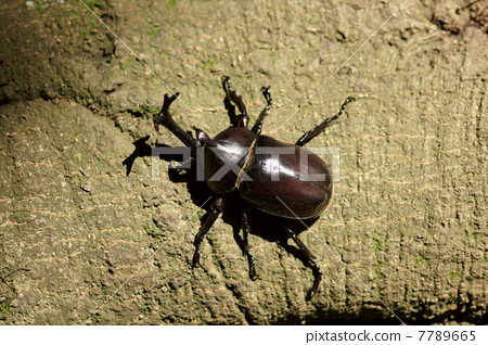 Beetle beetle is male 7789665