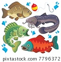 Various freshwater fishes 2 7796372