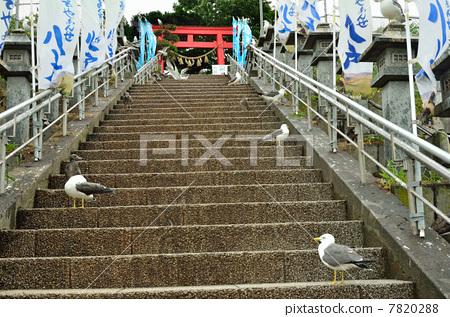 Walking in Hachinohe · Kobushima Shrine National Natural Monument of Umineko Breeding Area 7820288
