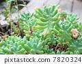 Succulent plants 7820324