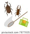 收集昆蟲 7877835