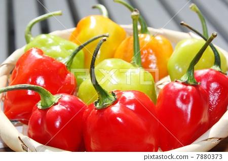 habañero pepper 7880373