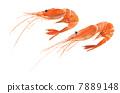 pink, shrimp, prawn 7889148
