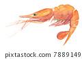 prawn, shrimp, botan 7889149