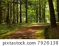 forest, woodland, avenues 7926138