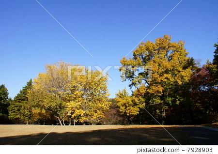 Liberal autumn and grand prix 7928903