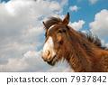 馬的臉朝上 7937842