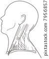 cephalic, cranium, head 7956857