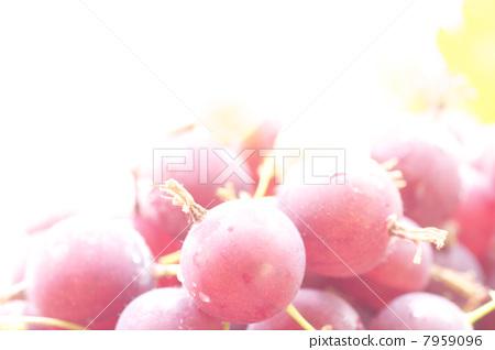 gooseberry 7959096