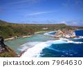 bird island, blue water, marine 7964630