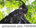 树 树木 树干 7964644