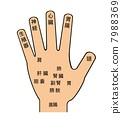 Point of hand 7988369