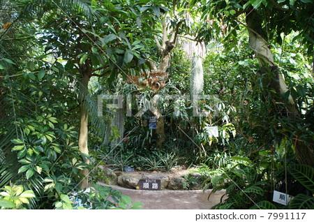 熱帶雨林 7991117