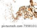 Orange water splash 7998101