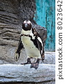 penguin, penguins, sea 8023642