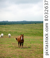 equine, horse, green color 8032637