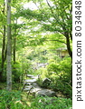 garden 8034848