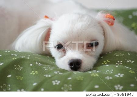 Martinez (sleepy) 8061943