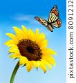 ดอกไม้,สีเหลือง,ทานตะวัน 8091212