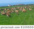 奶牛 牲口 牛 8109666