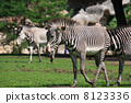 wildlife nature striped 8123336