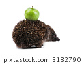 hedgehog wildlife animal 8132790