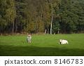 牲畜 家畜 牛 8146783