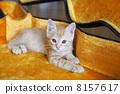 새끼 고양이 8157617