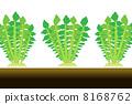蘿蔔的收穫 8168762