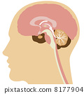 大腦 矢量 頭腦 8177904