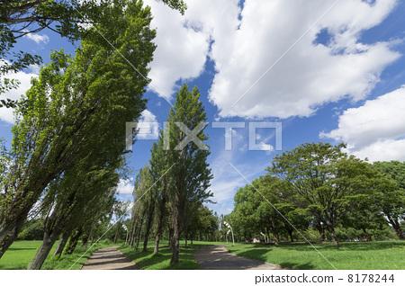 Poplar a tree 8178244