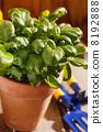 container, botany, botanical 8192888