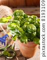 herb, fresh, healthy 8193109