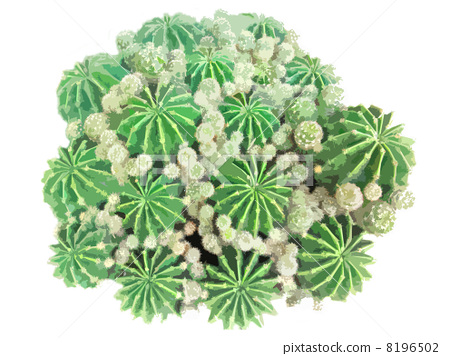 Cactus 8196502