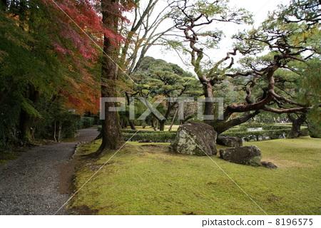 Ise shrine of autumn leaves 8196575