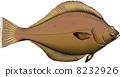 矢量 右偏比目鱼 鱼 8232926