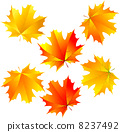 vector maple leaves 8237492