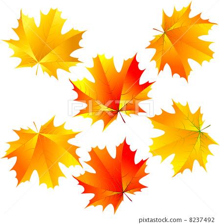 vector maple leaves 8237492