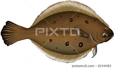 右偏比目鱼 矢量 鱼 8244083