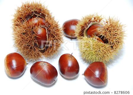 Chestnut into which it came: Matsukawa Village from Nagano Prefecture -4 8278606
