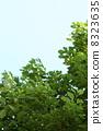 Cinnamomum, camphora, camphor 8323635