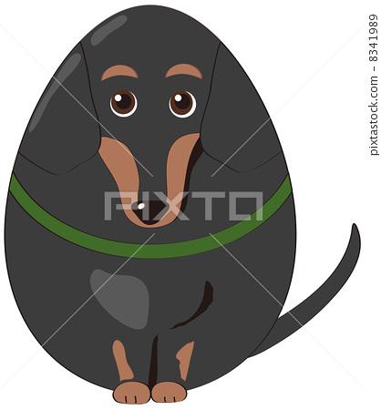Egg shaped dachshund 8341989