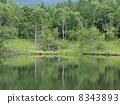 Summer Plateau 4 8343893